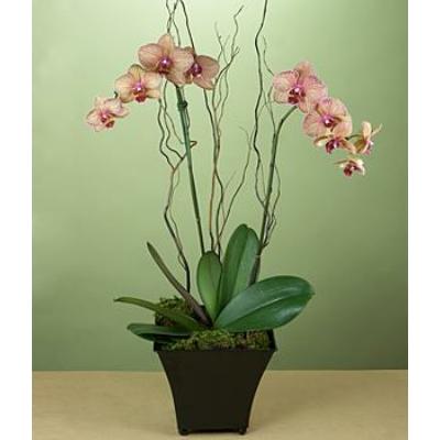 HAPPY DOG BABY MILK PROBIOTIC 0,5kg